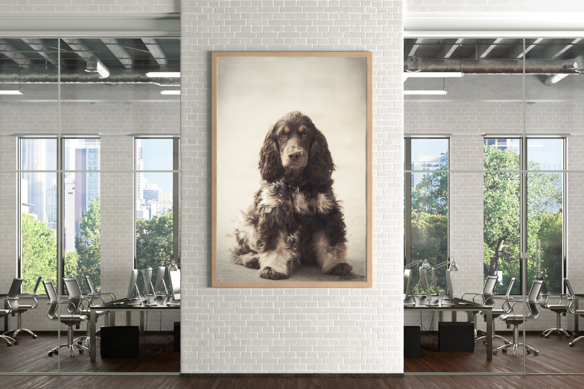Dog wall art by esther Marie Photography displayed in a business office.